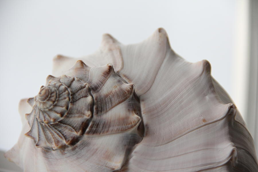 Shell Still Life 2 Photograph by Freddy Byrth