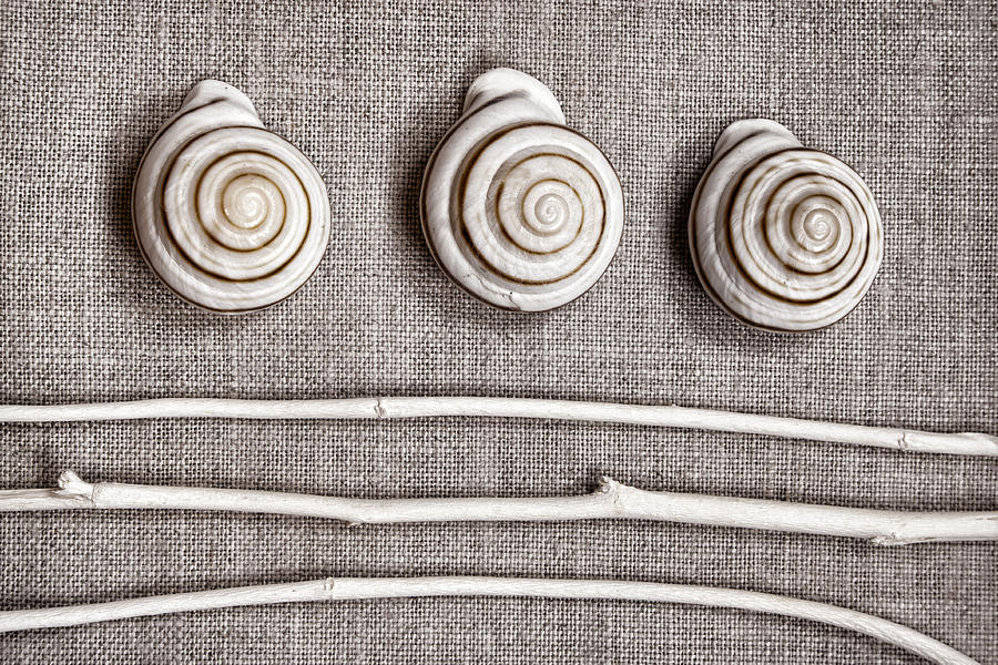 Collection Photograph - Shells And Sticks by Carol Leigh