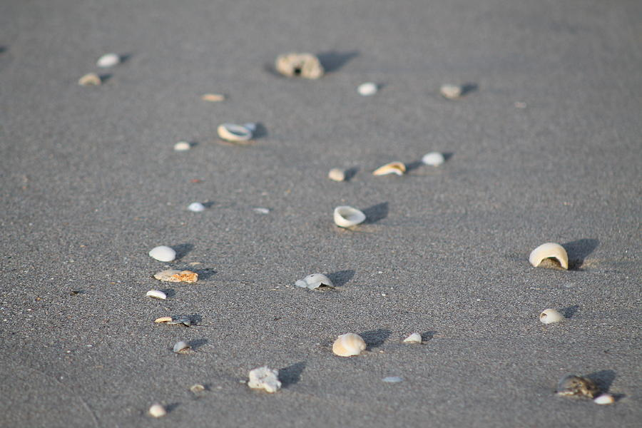 Beach Photograph - Shells On A Beach by Catie Canetti