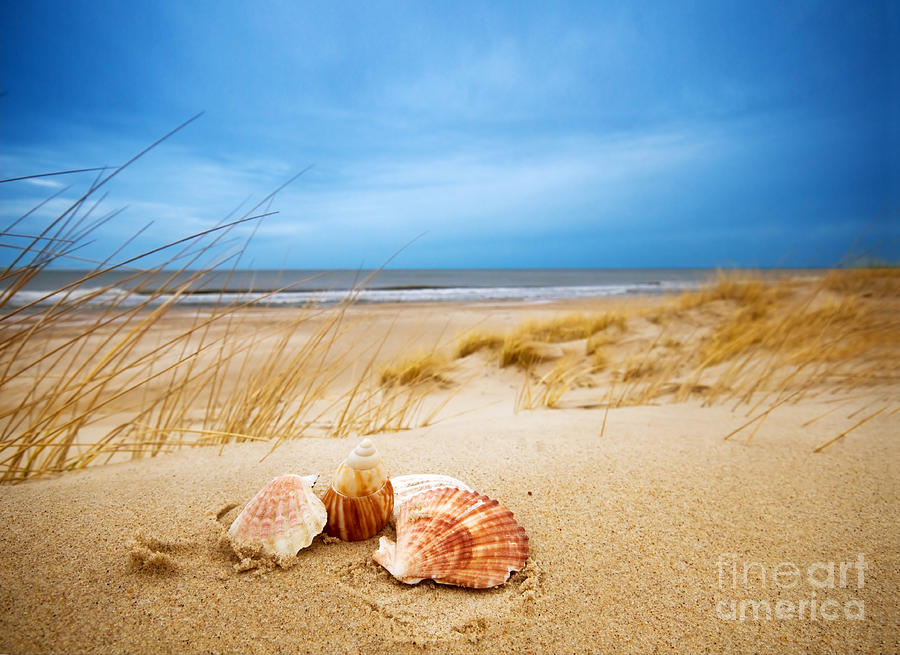 Shells On Sand Photograph by Michal Bednarek