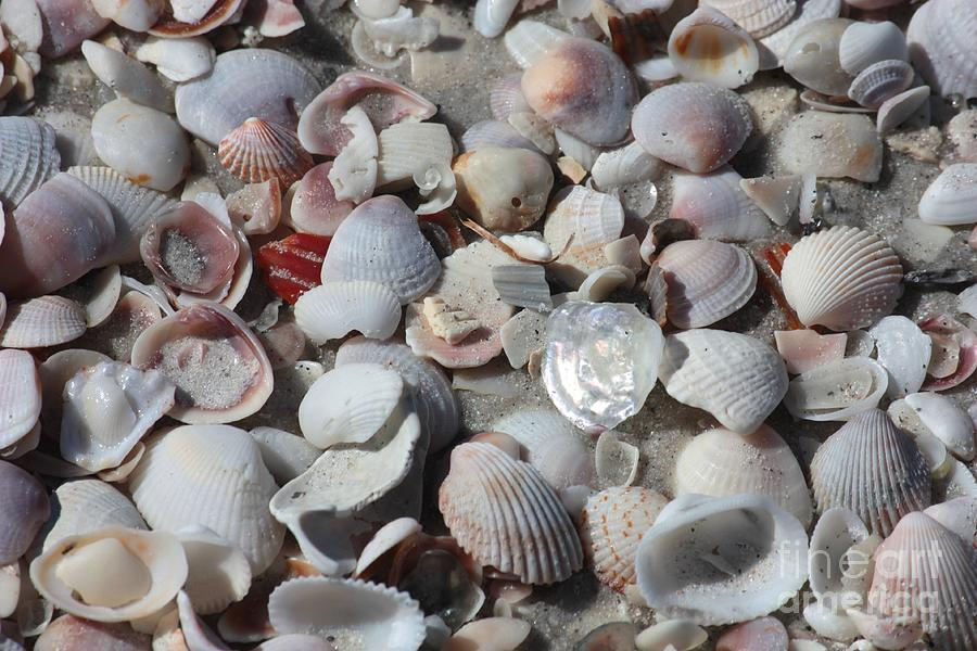 Shells Photograph - Shells On Treasure Island by Carol Groenen