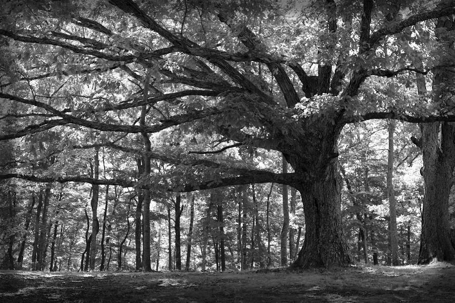 Tree Photograph - Shelter Me by Shari Jardina