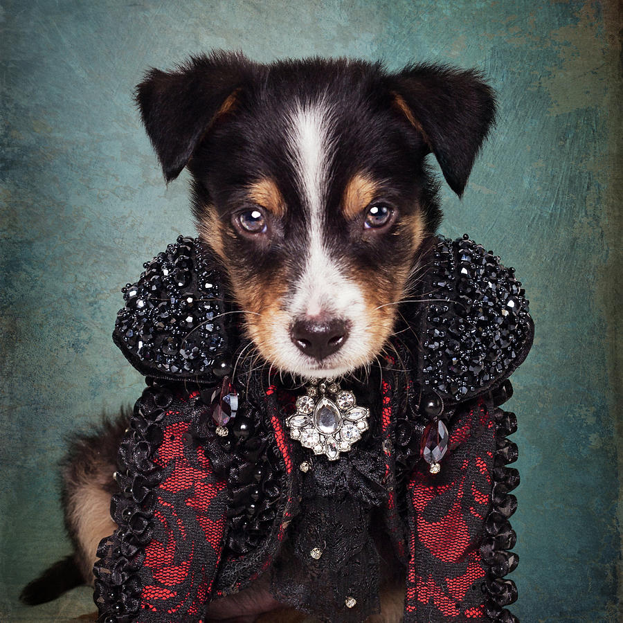 Animal Photograph - Shelter Pets Project - Loki by Tammy Swarek