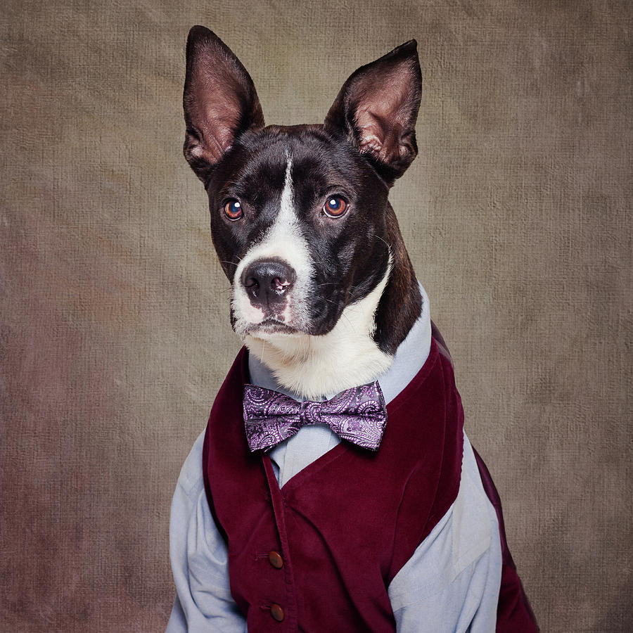Dog Photograph - Shelter Pets Project - Petey by Tammy Swarek