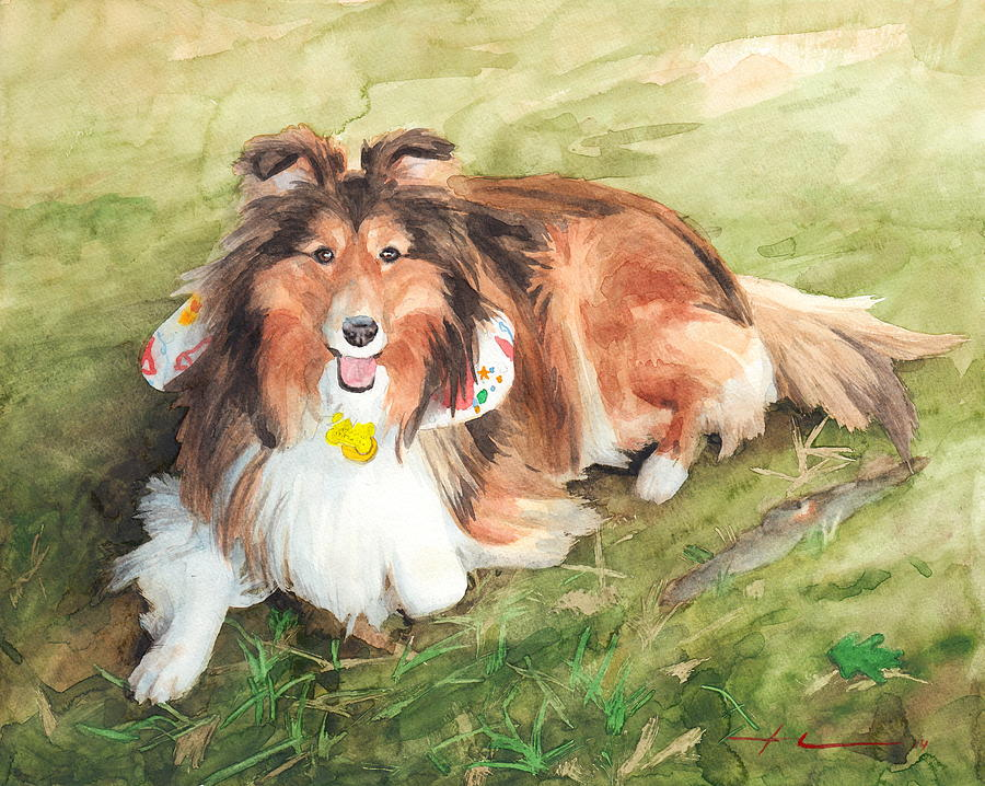 Sheltie On Lawn Watercolor Portrait Drawing by Mike Theuer