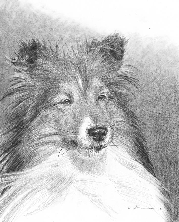 Sheltie Pencil Portrait Drawing by Mike Theuer