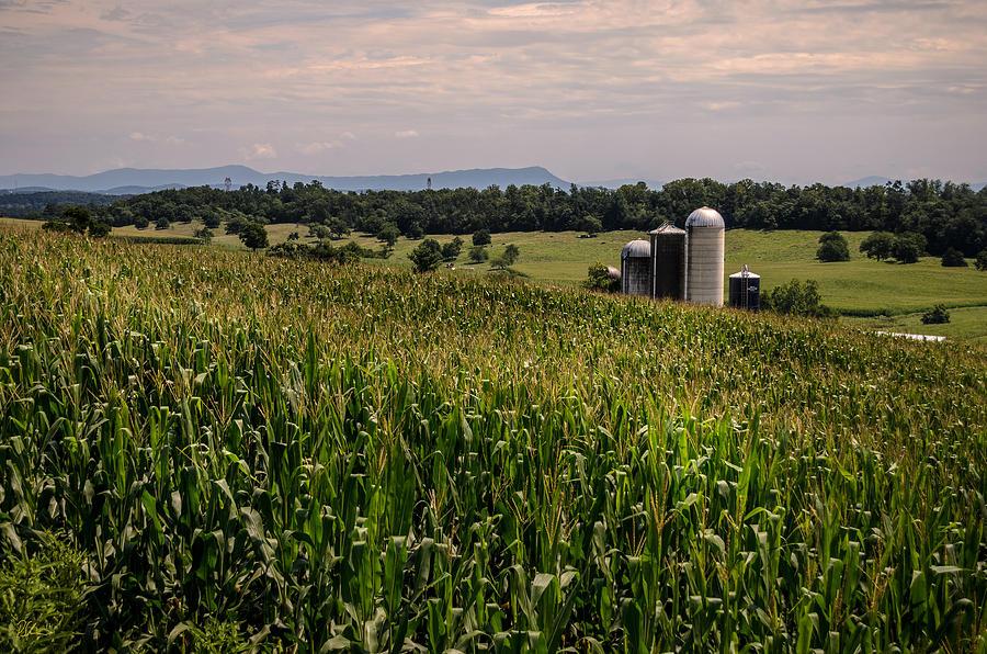 Shenandoah Valley Photograph - Shenandoah Corn by Pat Scanlon
