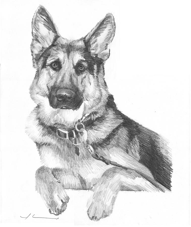 Shepherd Dog Pencil Portrait Drawing by Mike Theuer