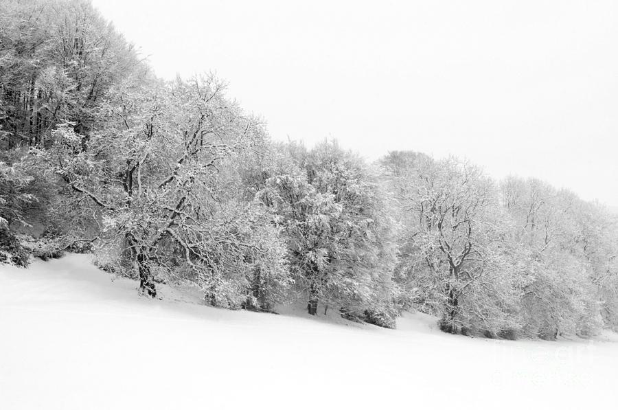 Annegilbert Photograph - Shermans Wood by Anne Gilbert