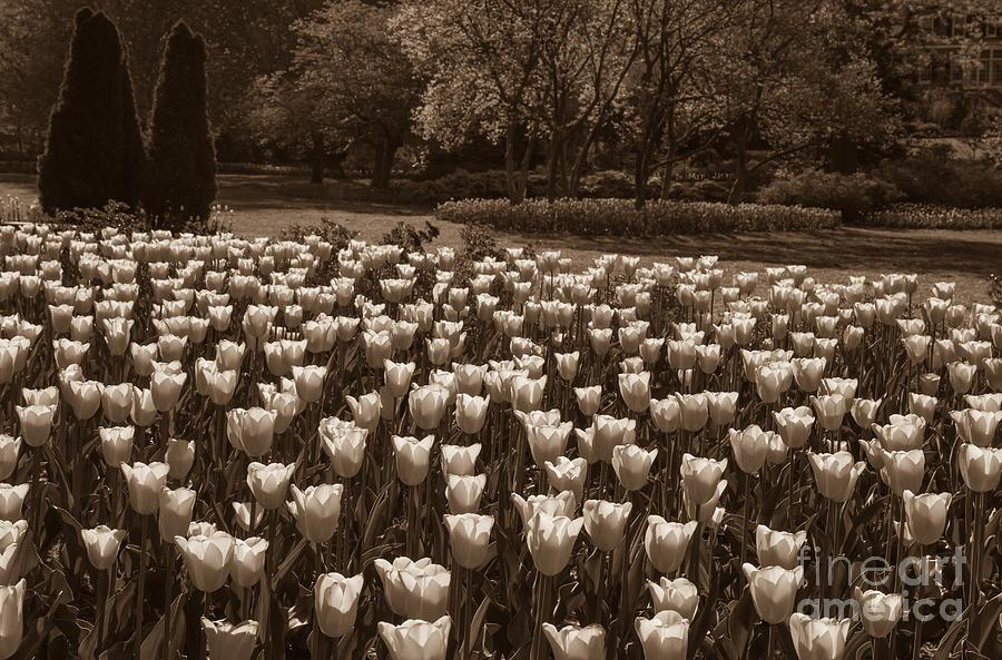 Sherwood Gardens Photograph - Sherwood Gardens 3 by Chris Scroggins