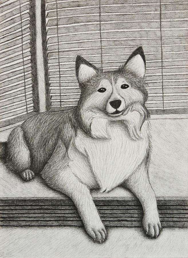 Sheep Drawing - Shetland Sheepdog by Jeanette K