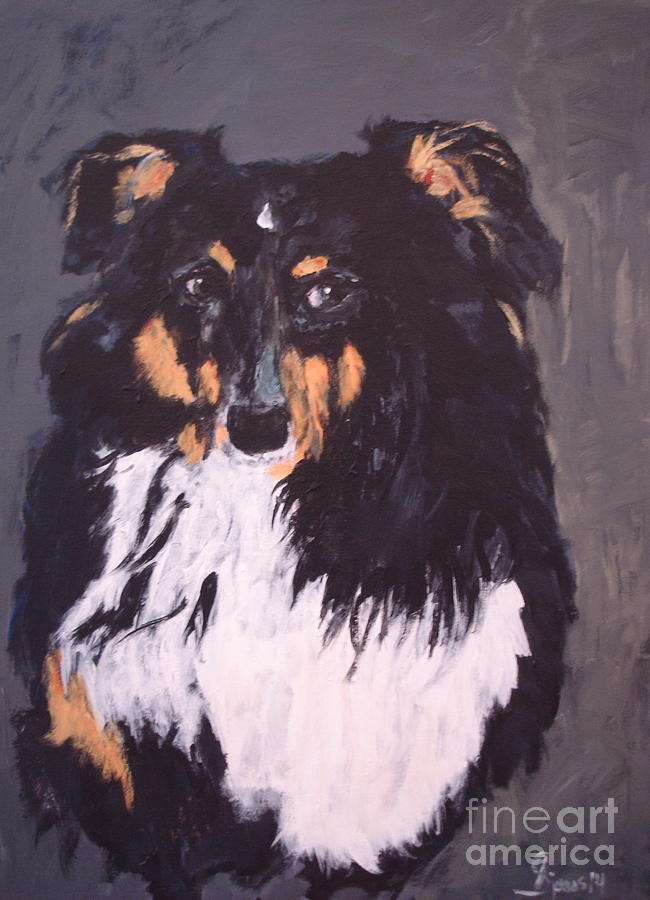 Sheltie Shetland Sheepdog by Shelley Jones