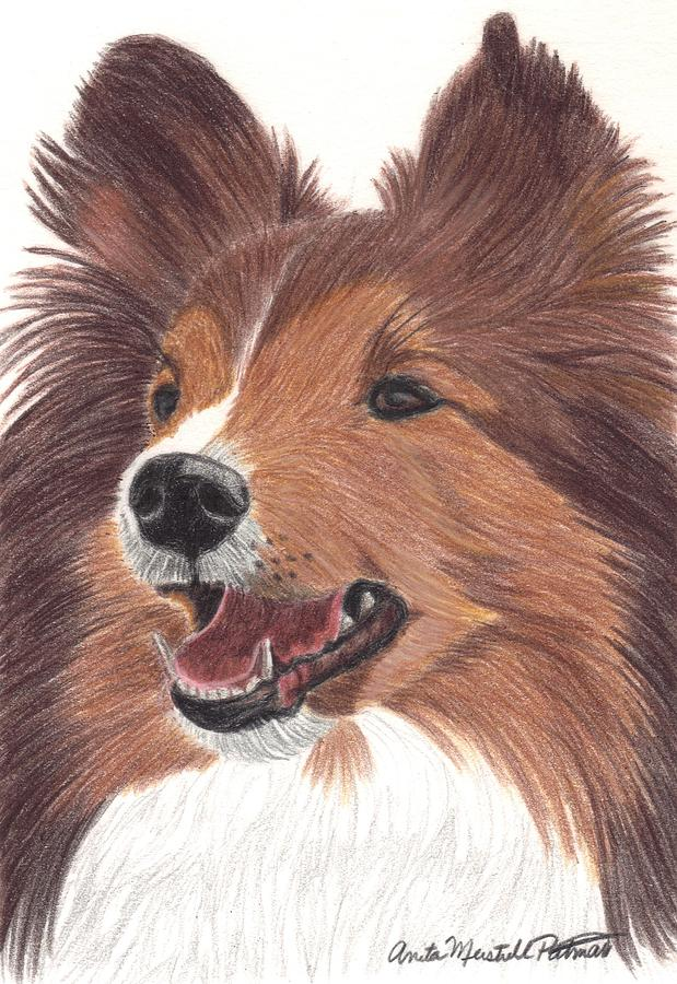 Dog Painting - Shetland Sheepdog Vignette by Anita Putman