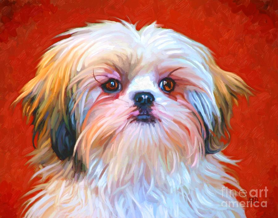 Dog Painting - Shih Tzu Painting by Iain McDonald