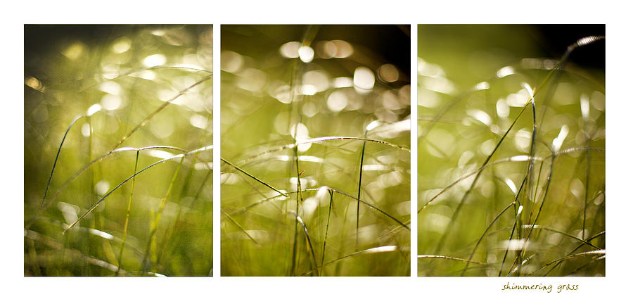 Grass Photograph - Shimmer by Linde Townsend