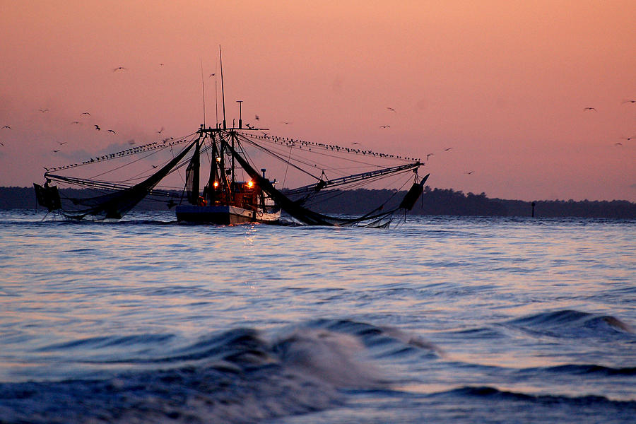 Shimp Boat returning to Port by Peter DeFina