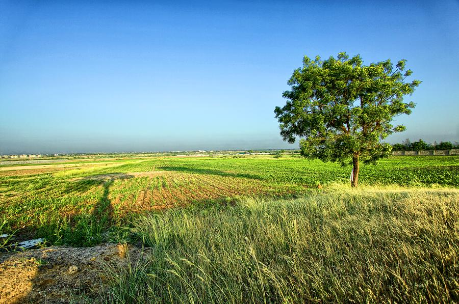 Shinay, Gandhidham, Kutch Photograph by © Jayesh Bheda