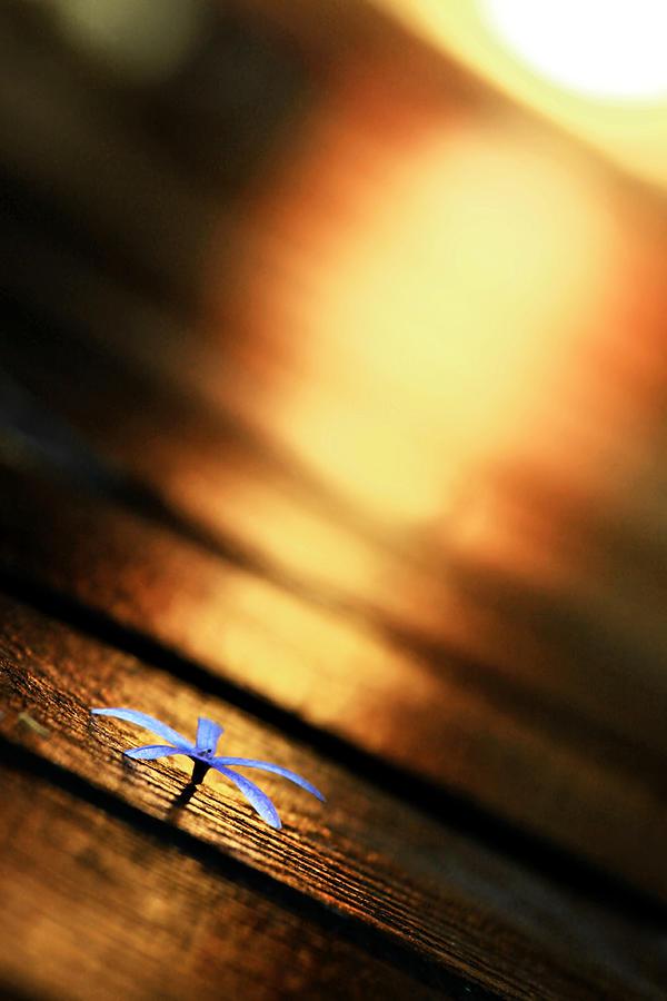 Flower Photograph - Shine On Me by Suradej Chuephanich