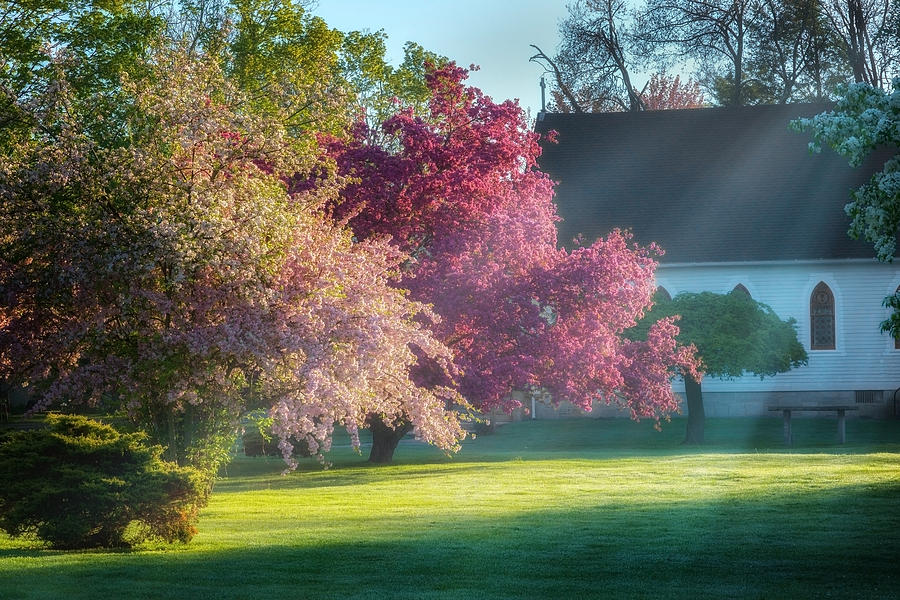 Spring Photograph - Shine The Light On Me by Bill Wakeley