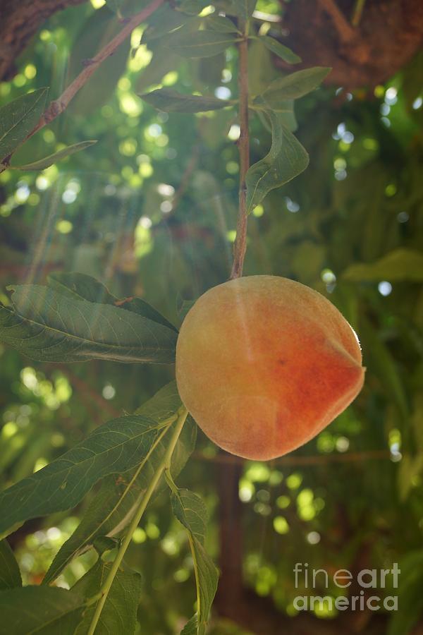 Peach Photograph - Shining Peach by Kerri Mortenson