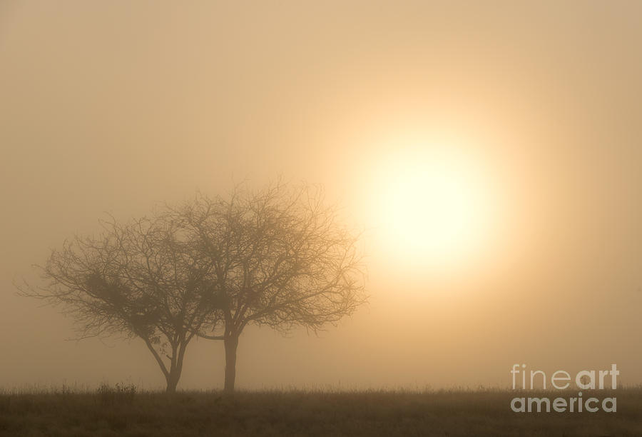 Sunrise Photograph - Shining Through by Mike  Dawson