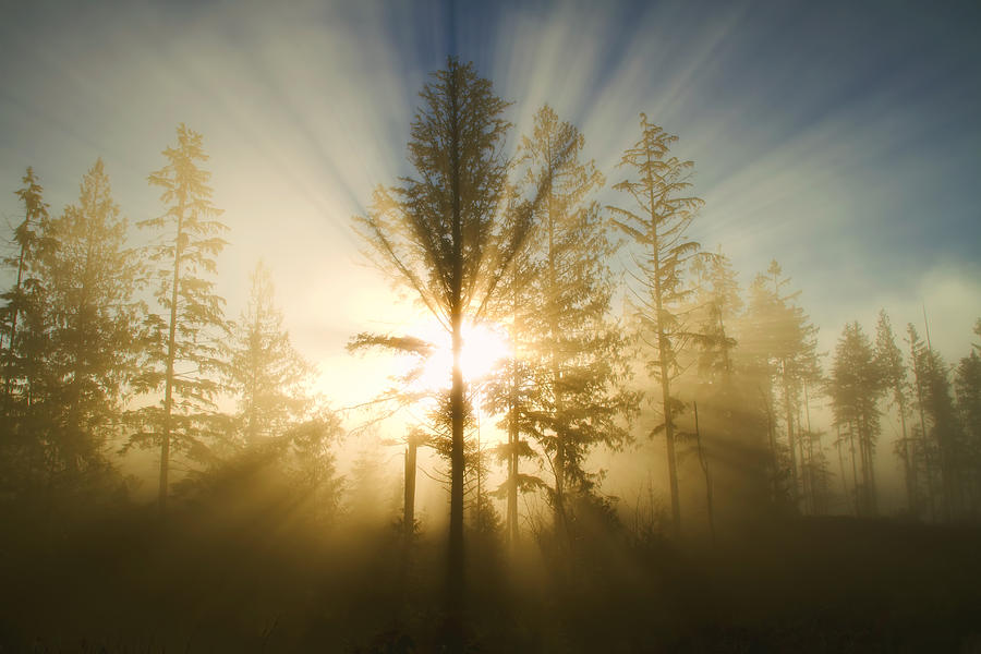 Sunshine Photograph - Shining Through by Peggy Collins