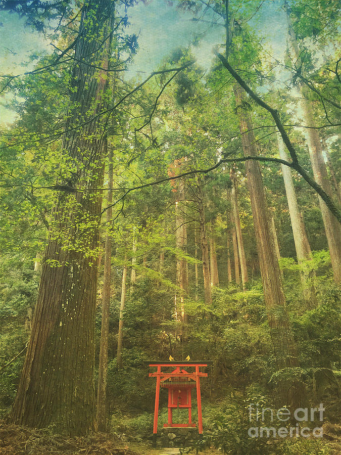 Shinto Shrine Photograph - Shinto Shrine Deep In the Forest by Beverly Claire Kaiya
