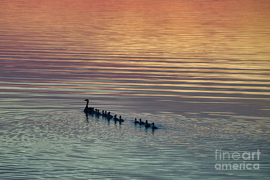 Shipshewana Photograph - Shipshewana Lake Evening by David Arment