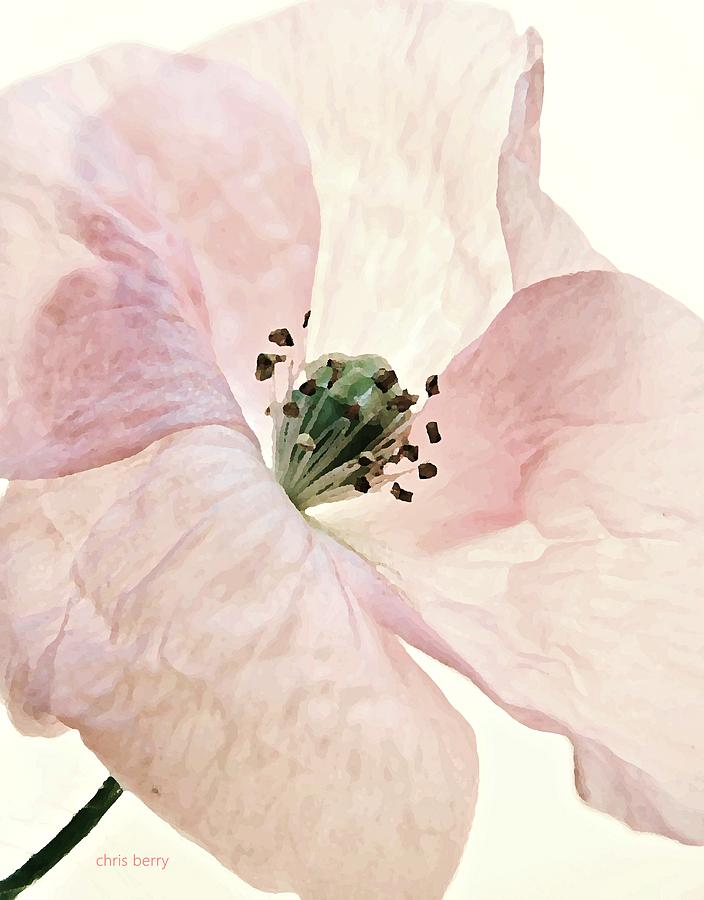 Poppy Photograph - Shirley Watercolor by Chris Berry