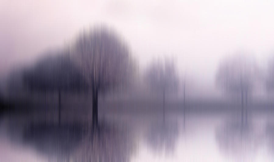 Trees Photograph - Shiver by Jessica Jenney