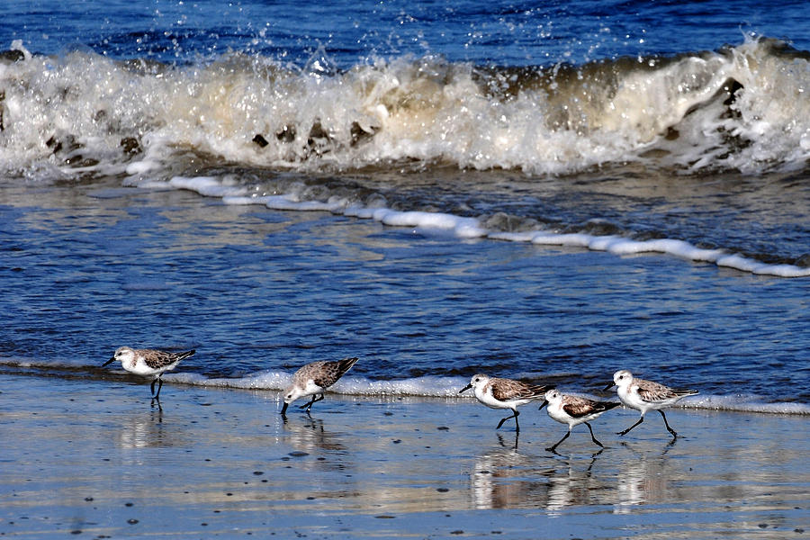 Shore line feeders  by Peter DeFina