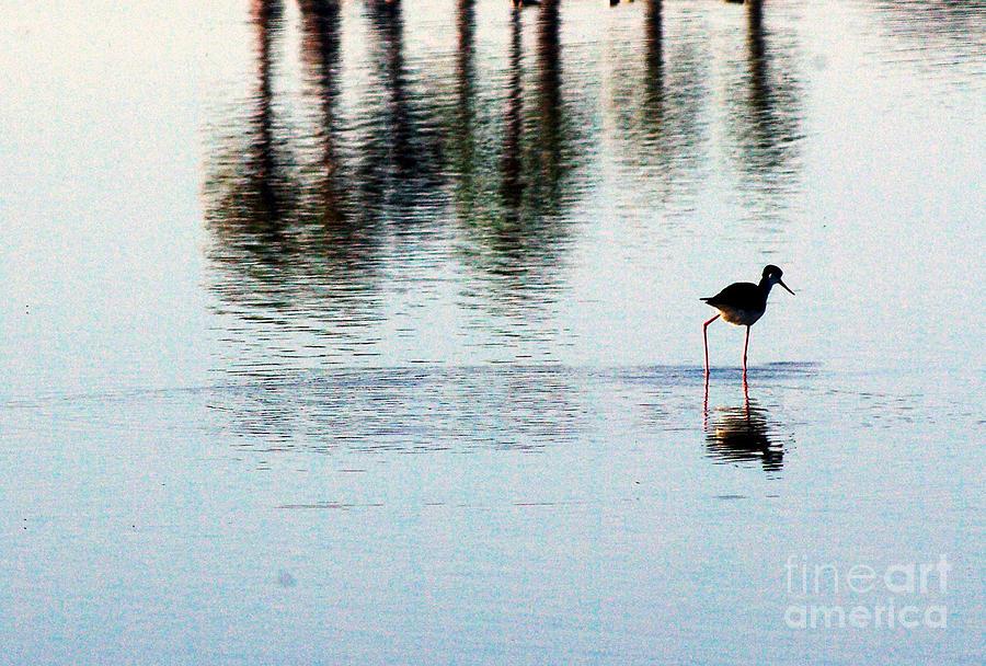 Shorebirds Photograph - Shorebird 1.0388 by Stephen Parker