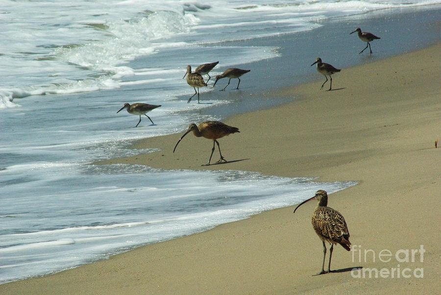 Shorebirds Photograph - Shorebirds 1.4168 by Stephen Parker