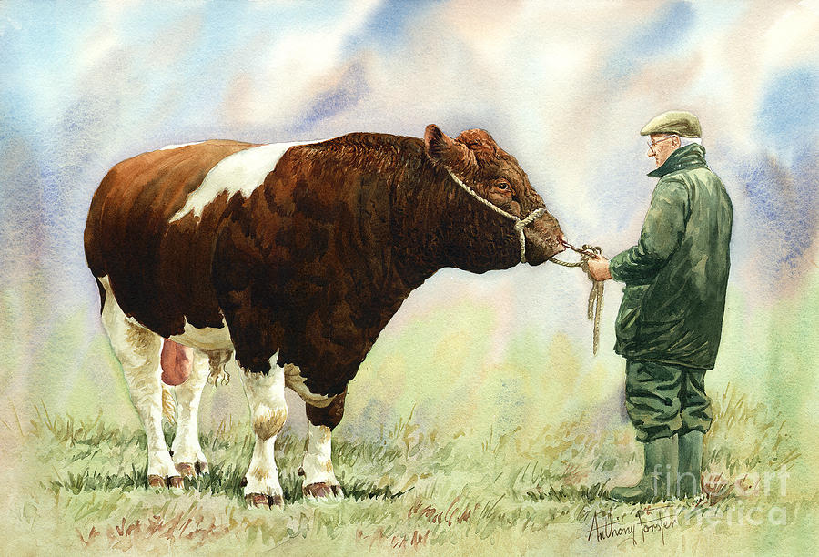 Cattle Painting - Shorthorn Bull by Anthony Forster