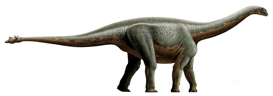 Horizontal Digital Art - Shunosaurus, A Genus Of Sauropod by Mohamad Haghani