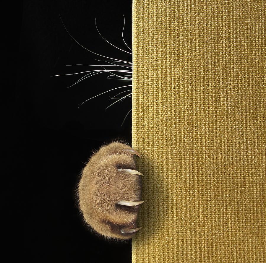 Cat Photograph - Shy Cat ... by Iryna Kuznetsova (iridi)