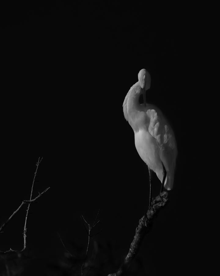 Black And White Photograph - shy by Mario Celzner