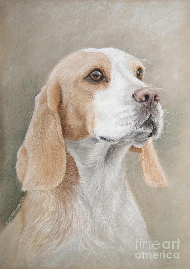 Dog Drawing - Beagle Portrait by Tobiasz Stefaniak