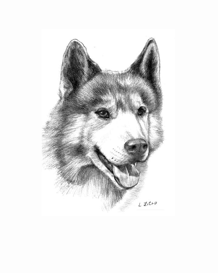 how to draw a husky face easy
