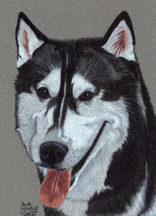Husky Drawing - Siberian Husky Vignette by Anita Putman