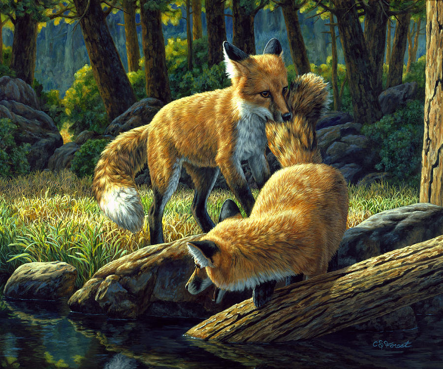 Fox Painting - Red Foxes - Sibling Rivalry by Crista Forest