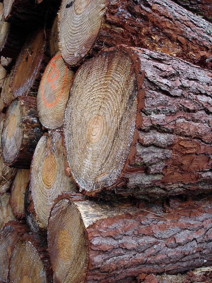 Nature Photograph - Side Log View by Michel Mata