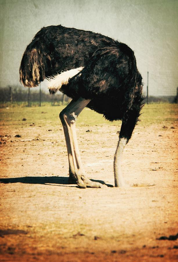 Side View Of An Ostrich On Landscape Photograph by Robert Morrissey / Eyeem