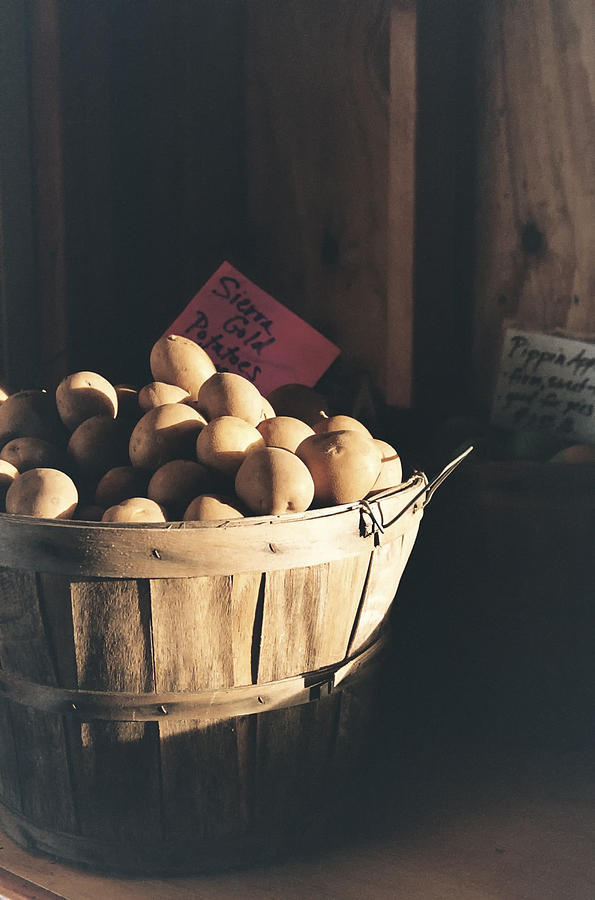 Potatoes Photograph - Sierra Gold by Caitlyn  Grasso