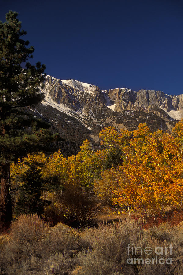 Plant Photograph - Sierra Nevadas In Autumn by Ron Sanford