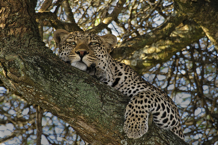 Africa Photograph - Siesta Time by Gary Hall