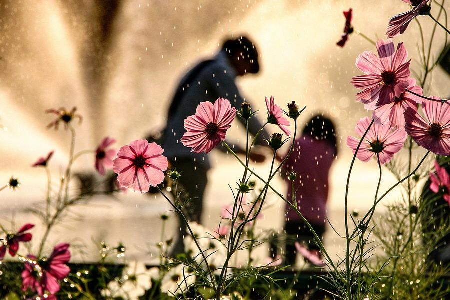 Family Photograph - Sight In The Memory by Takako Fukaya