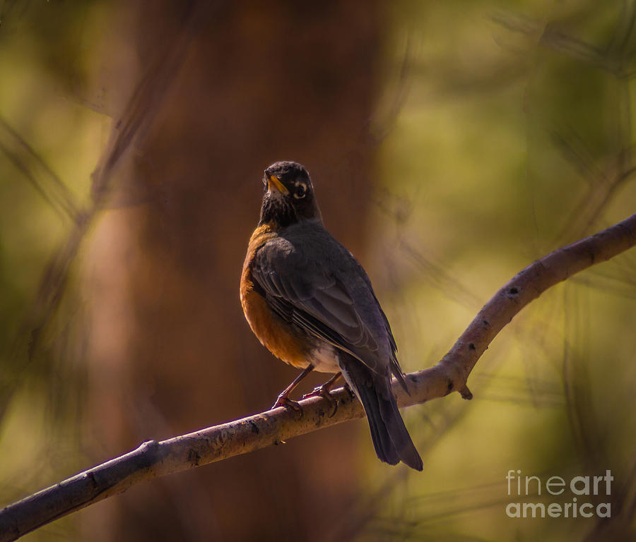 Songbird Photograph - Signs Of Spring by Mitch Shindelbower