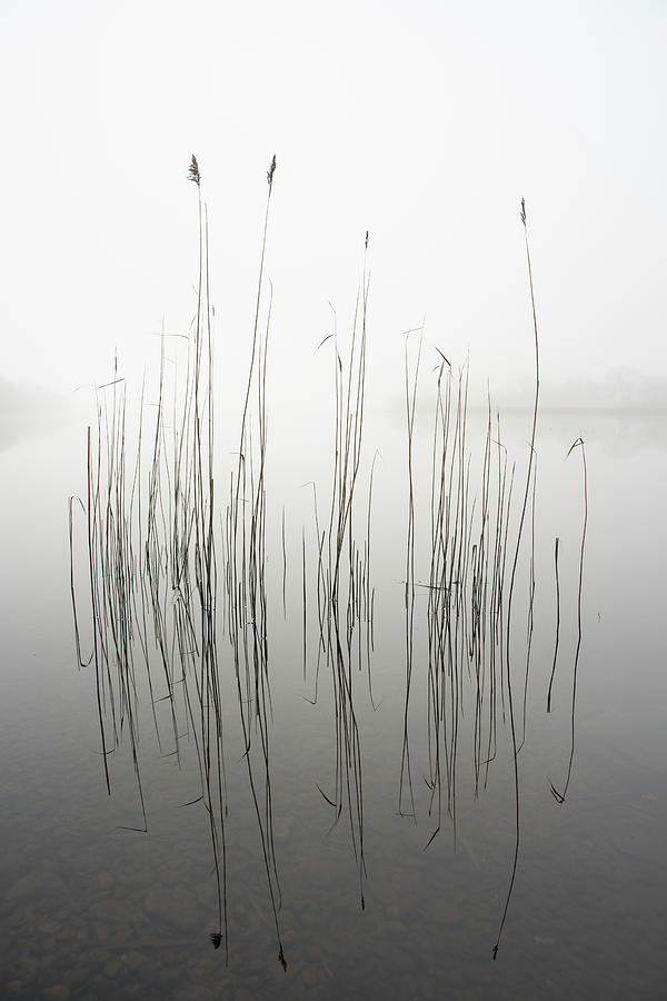 Zen Photograph - Silence by David Ahern