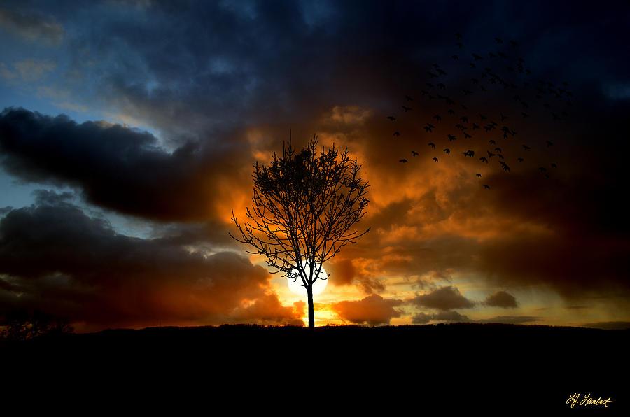 Lisa Lambert Photograph - Silence by Lj Lambert